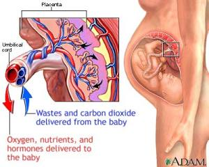 Placental development